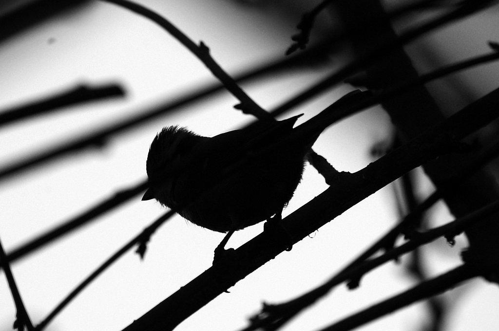 oiseau - Hiver 2012