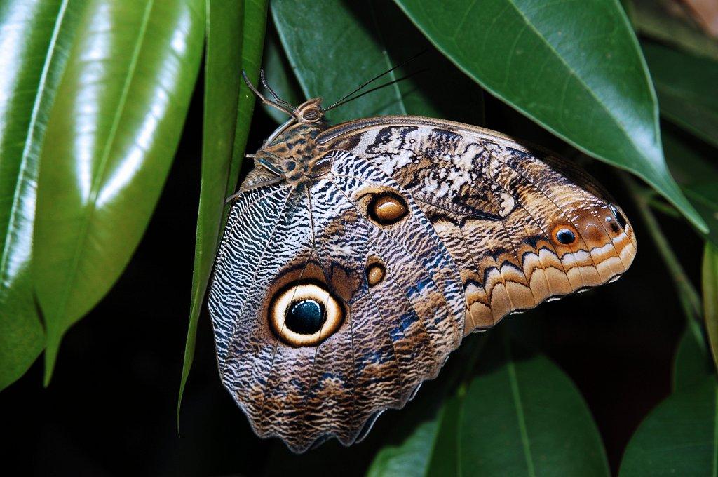 Jardin des Papillons - Alsace